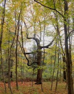 weird tree3