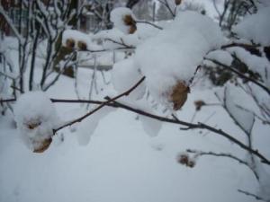 Feb 28 snow 4