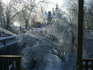 Ice-coverd tree