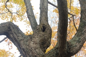Knot in tree