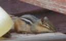 """Heat Wave: """"Deep summer is when laziness finds respectability."""" - Sam Keen"""