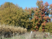 """Changes: """"Autumn carries more gold in its pocket than all the other seasons."""" - Jim Bishop"""