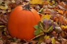 "Pumpkin Time: ""I would rather sit on a pumpkin and have it all to myself, than be crowded on a velvet cushion."" – Henry David Thoreau"