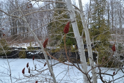 Sumac & Birch at the Quarry