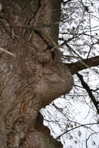 Tree Ent 2