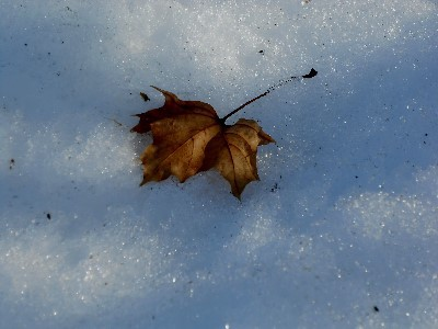 Leaf in shadow & snow