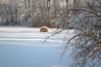 Hay Field in Winter