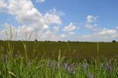 Farmer's Field 2