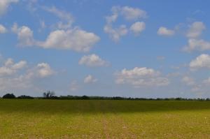 Half sun-Half Shadow field