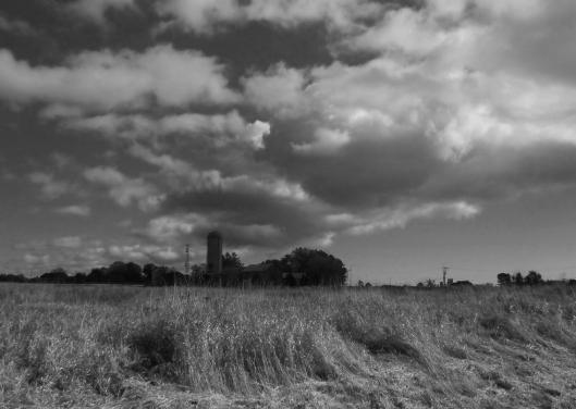 Farmer's Field - black & white