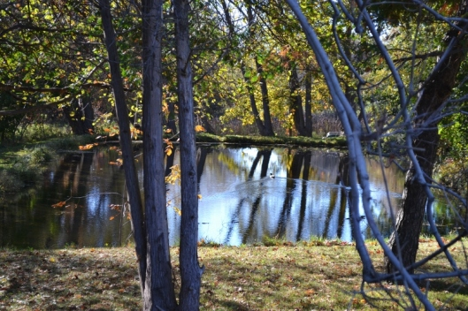 Tree and Pond 2
