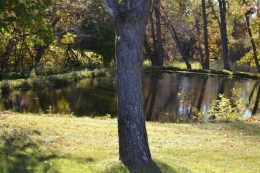 Tree and Pond