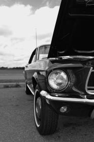 Mustang (2) (533x800)
