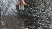 Winter Birds 3
