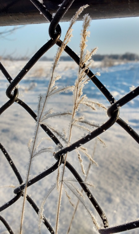 Snowy Fence_ed