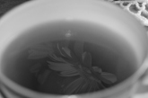 Gerbera and tea
