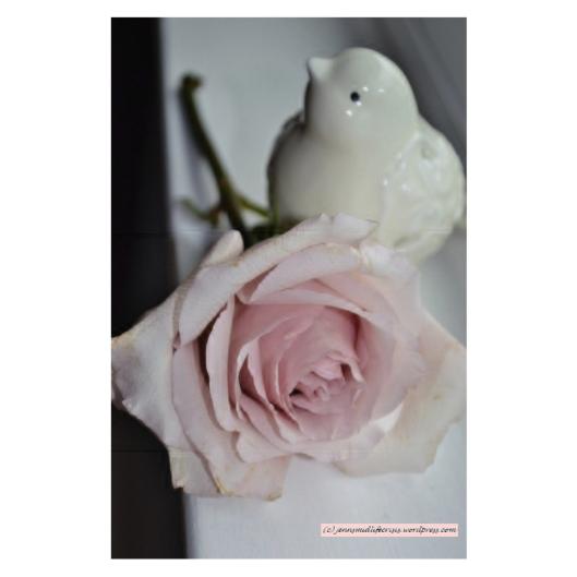 Pink Rose with Bird