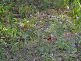 Butterfly (2) (800x602)
