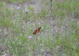 Butterfly (6) (800x576)