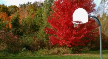 Red Maple_Basketball