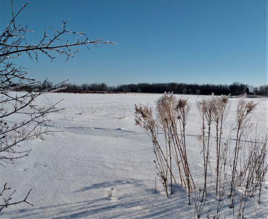 Winter_ed