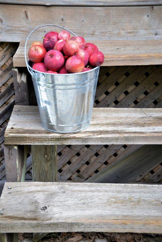 Apples_ed