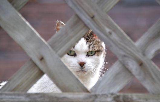 Cat_ed