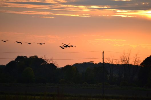 Sunset4_ed