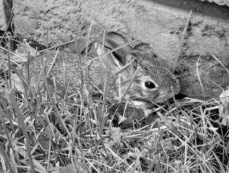 Bunny_ed