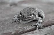 Frog 2018 (2)