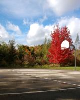 Red Maple_Basketball2