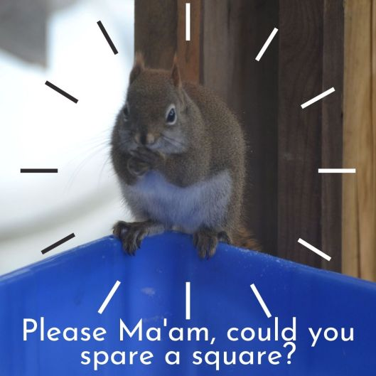 Please Ma'am, could you spare a square_