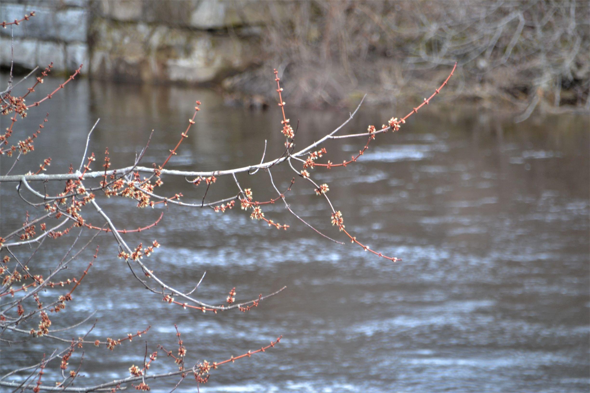 River6_ed