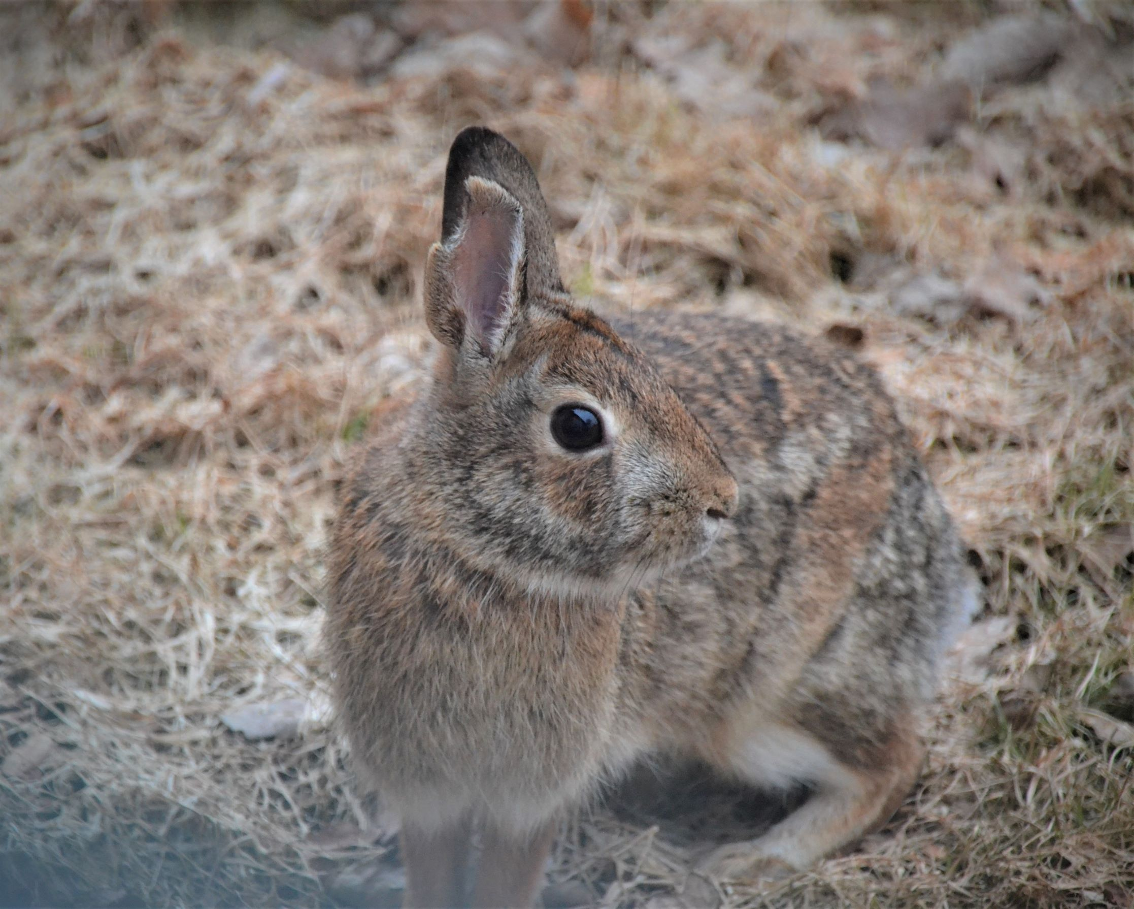 Big Bunny 2_ed