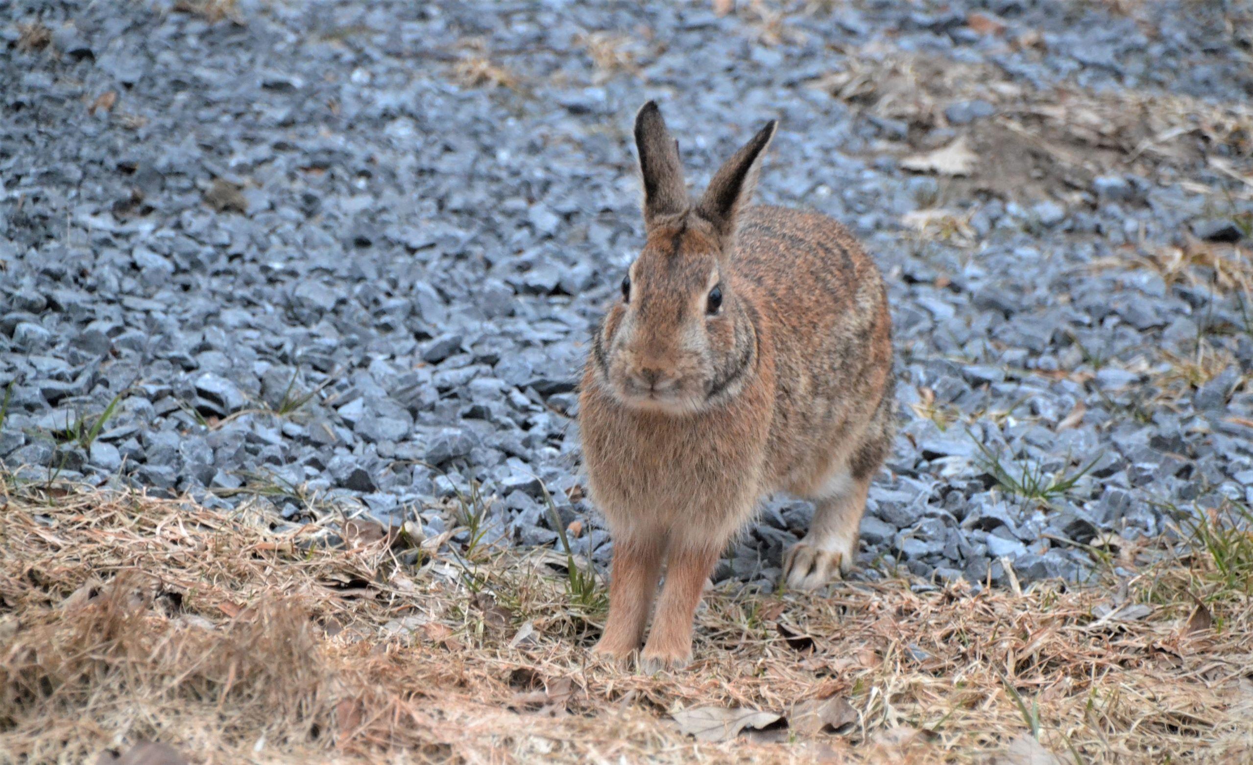 Big Bunny_ed