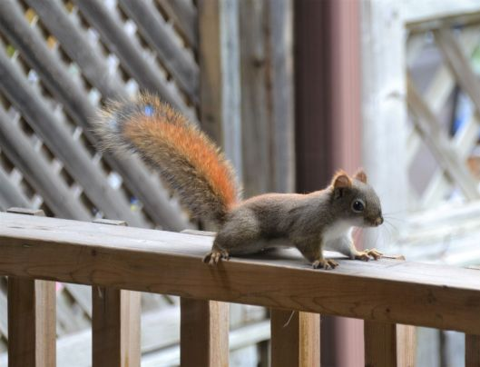 Squirrel1_ed
